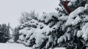 Schnee auf Tanne